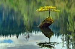 bonsai-no-rio